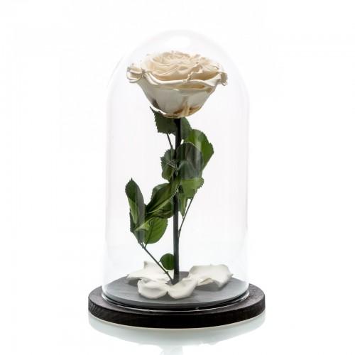 Trandafir criogenat alb