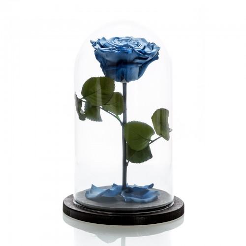 Trandafir criogenat albastru degrade mare