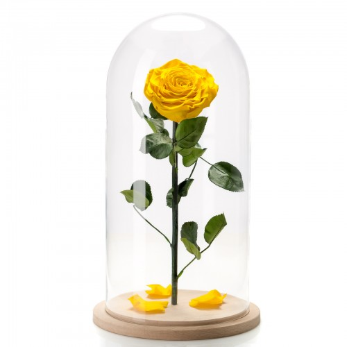 Trandafir criogenat galben in cupola de sticla mare