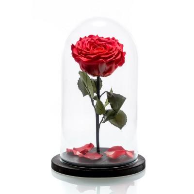 Trandafir criogenat corai mare