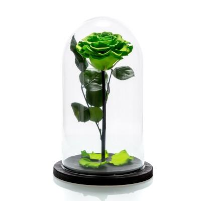 Trandafir criogenat verde neon