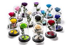 florarie online - trandafiri criogenati