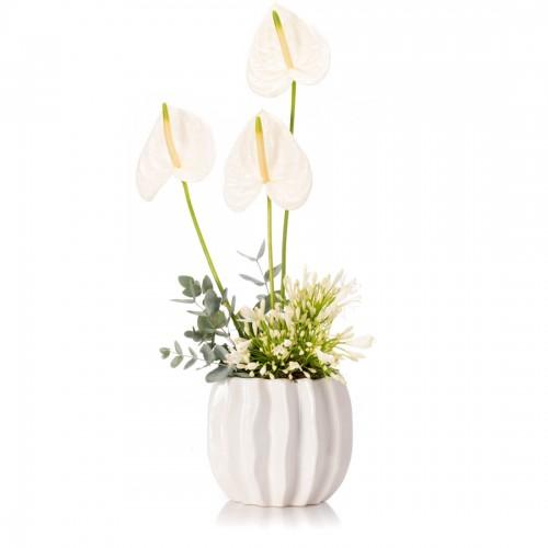 Aranjament floral cu agapanthus si anthurium alb