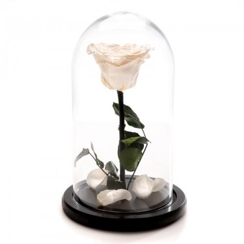 Trandafir Criogenat alb in forma de inima *Editie limitata