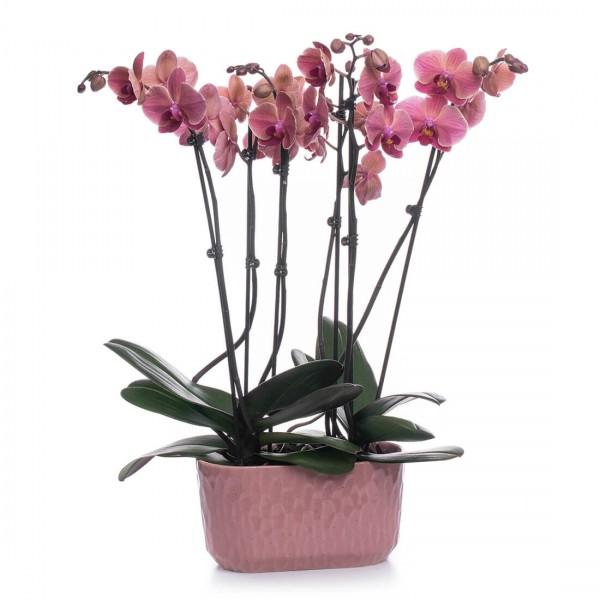 Aranjament Cu Orhidee Phalaenopsis Corai