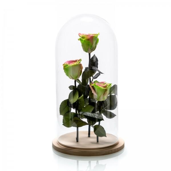 Aranjament 3 trandafiri criogenati bicolori