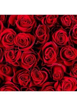 Buchet de trandafiri in orice numar