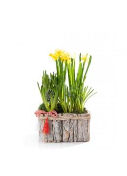 Aranjmament floral in cos cu bulbi de zambile, narcise si muscari