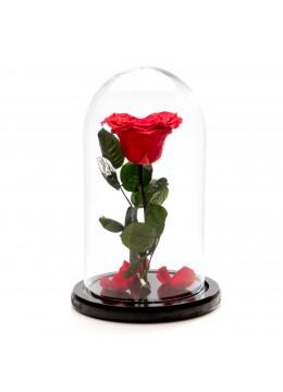 Trandafir criogenat rosu inima