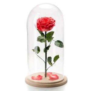 Trandafir criogenat corai in cupola de sticla mare