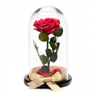 Trandafir Criogenat Rosu christmassy
