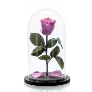 Trandafir criogenat mov mediu