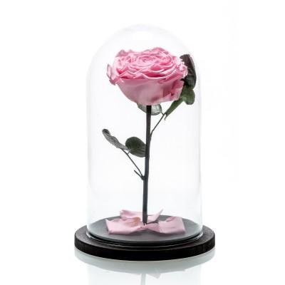 Trandafir criogenat Roz mare