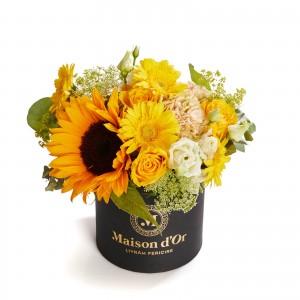 Cutie cu floarea soarelui si germini