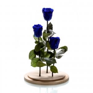Aranjament 3 trandafiri criogenati albastri