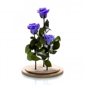Aranjament 3 trandafiri criogenati mov