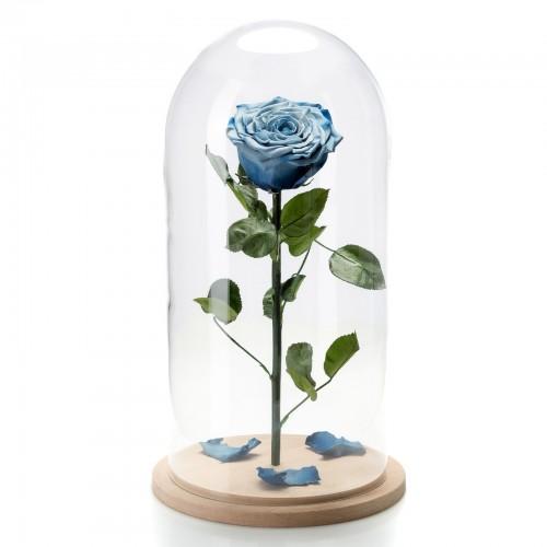Trandafir criogenat albastru degrade in cupola de sticla mare