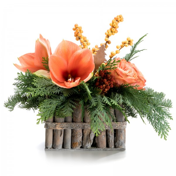 Christmas arrangement with Protea