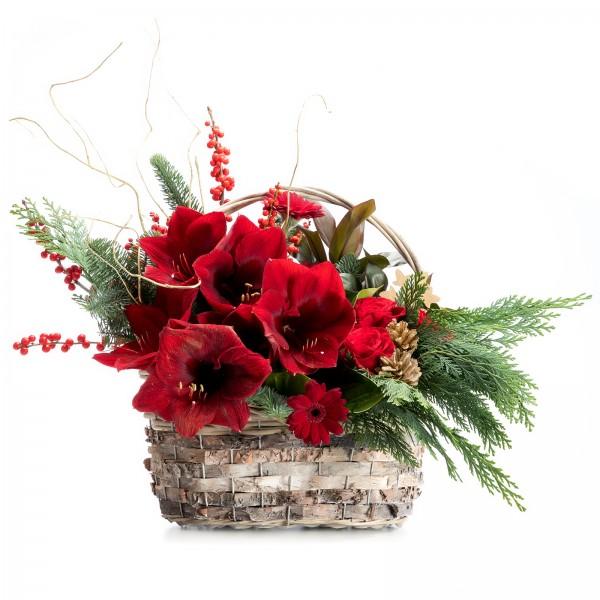 Christmas arrangement with Amaryllis