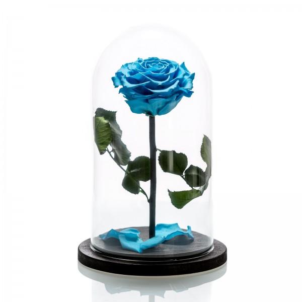 Blue cryogenic rose