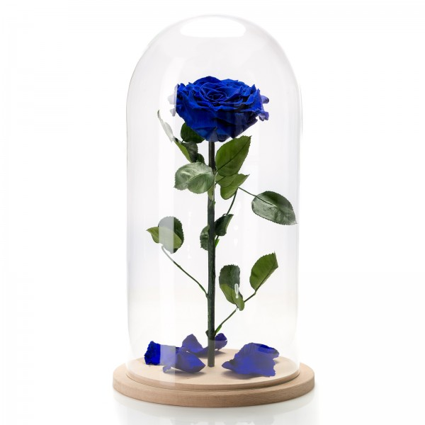 Electric blue cryogenic rose in large glass dome