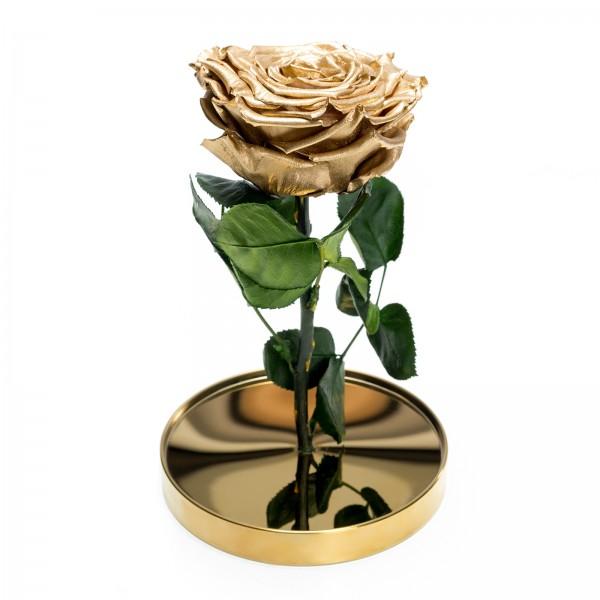 Golden cryogenic rose