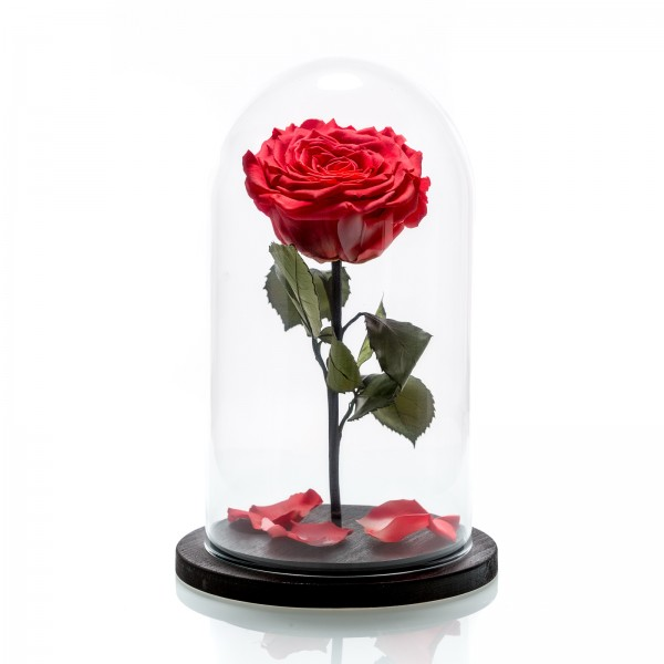 Large coral cryogenic rose