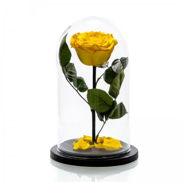 Large yellow cryogenic rose