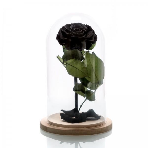 Large black cryogenic rose