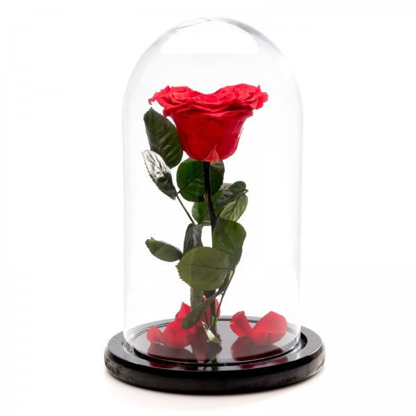 Heart red cryogenic rose