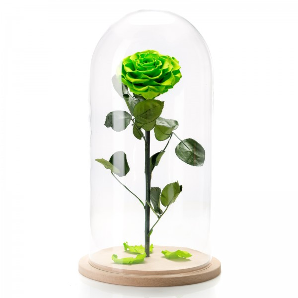Neon green cryogenic rose in large glass dome