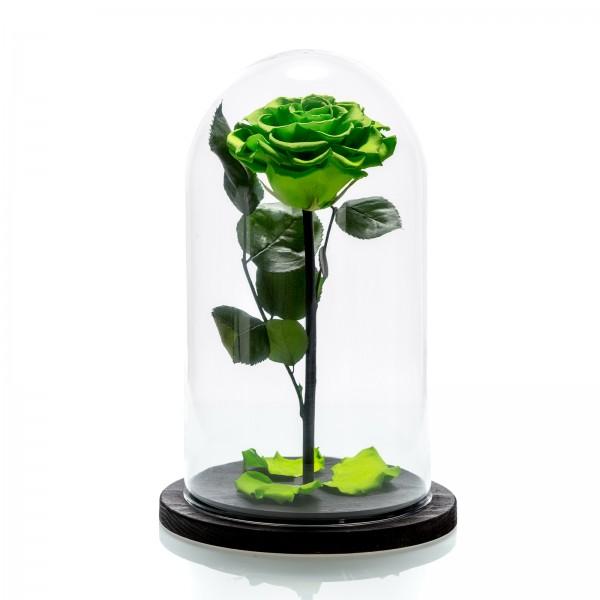 Neon green cryogenic rose