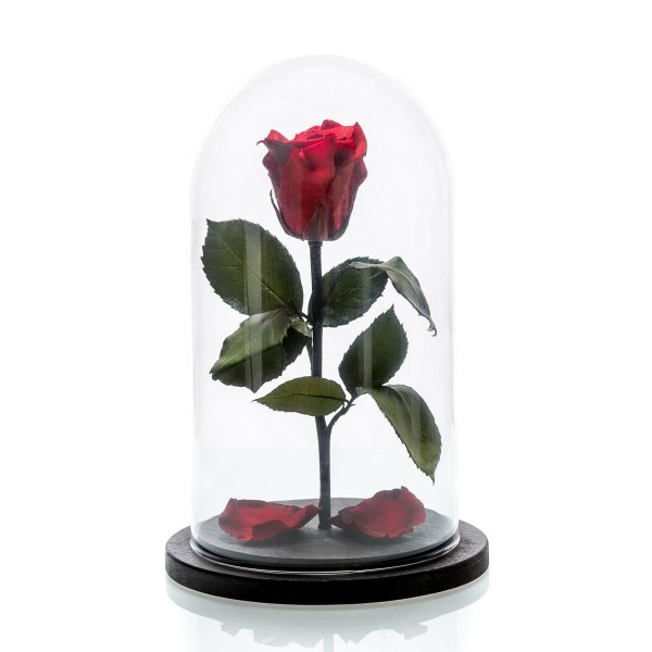 Medium red cryogenic rose