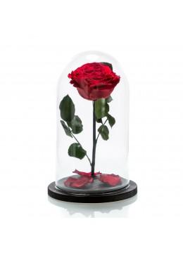 Large red cryogenic rose