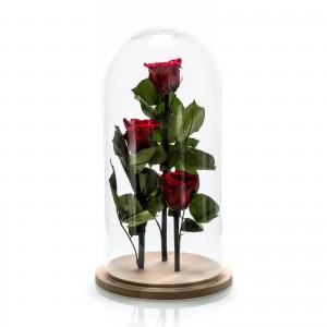 Arrangement 3 red cryogenic roses