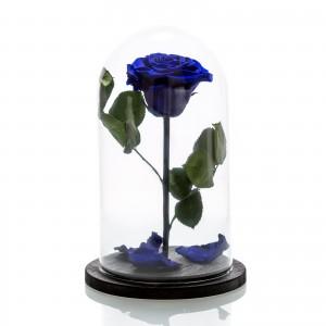 Large electric blue cryogenic rose