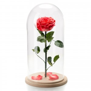 Coral cryogenic rose in a large glass dome