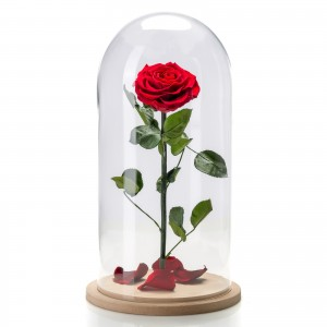 Red cryogenic rose in large glass dome