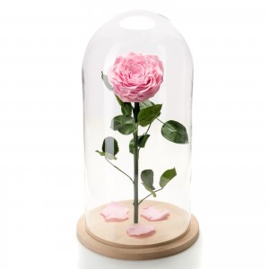 Pink cryogenic rose in large glass dome