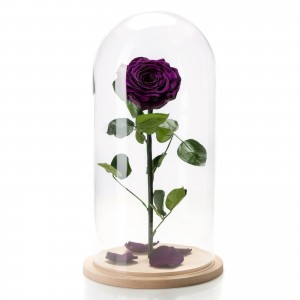Purple cryogenic rose in a large glass dome