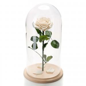 Trandafir nemuritor alb in cupola de sticla mare