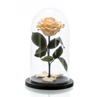 Trandafir criogenat crem
