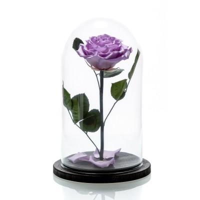 Trandafir nemuritor lila mare