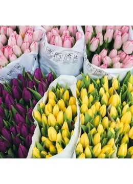 Bouquet of tulips in any number