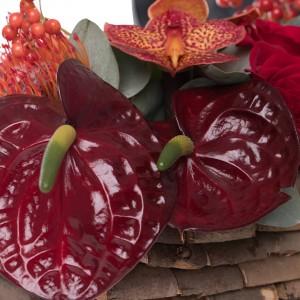 Aranjament floral in cos cu anthurium grena si orhidee
