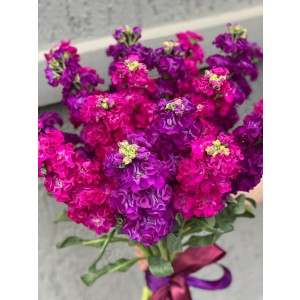 Bouquet With 19 Matthiola Multicolor