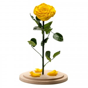 Yellow cryogenic rose in a large glass dome