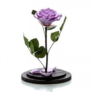 Immortal rose big lilac