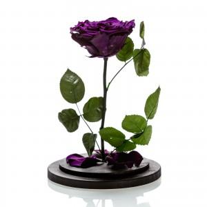 Purple cryogenic rose