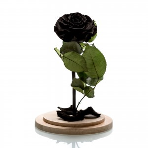 Large black cryogenic rose